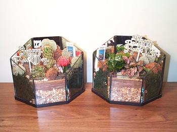 Terrarium Holiday Bosse's Day