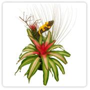 Bromeliad Extra Large Dish Garden
