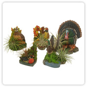 bromeliad Game Bird Planter