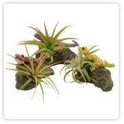 Bromeliad Lizard Planter
