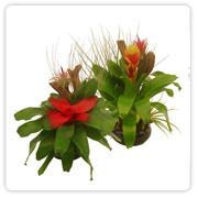 Bromeliad Medium Dish Garden