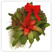 Bromeliad Medium Wreath