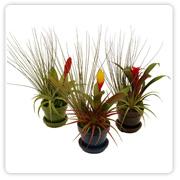 Bromeliad Round Garden