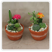 Cactus Clay Gardens w/Graft