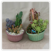 Cactus Glazed Garden