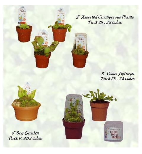 Dish Garden Carnivorous Plants