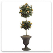 Hibiscus 2-Head Topiary