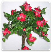 Hibiscus 3-Head Topiary