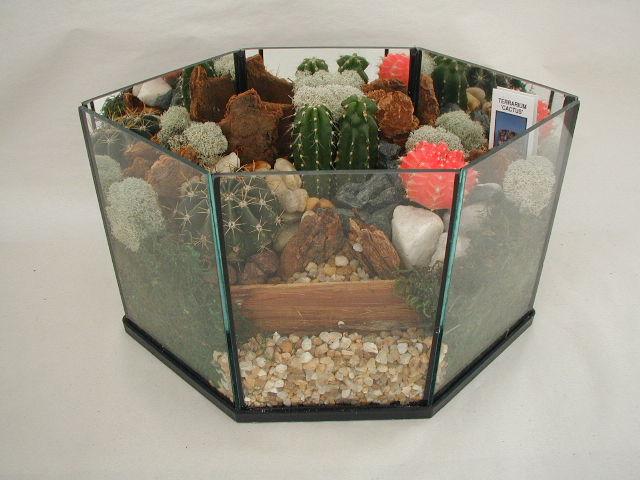 Terrarium Cactus 406