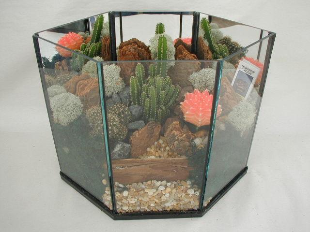 Terrarium Cactus 408