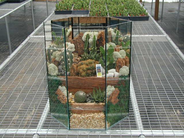 Terrarium Cactus 720