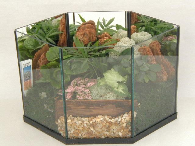 Terrarium Foliage 508