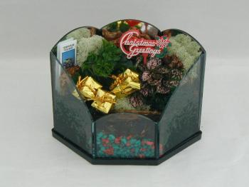 Terrarium Holiday Christmas