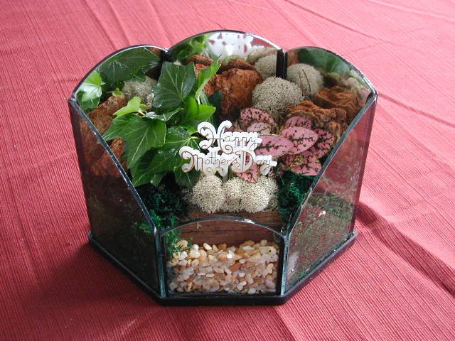 Terrarium Holiday Mother's Day