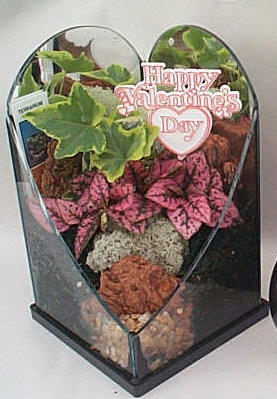Terrarium Holiday Valentine Heart